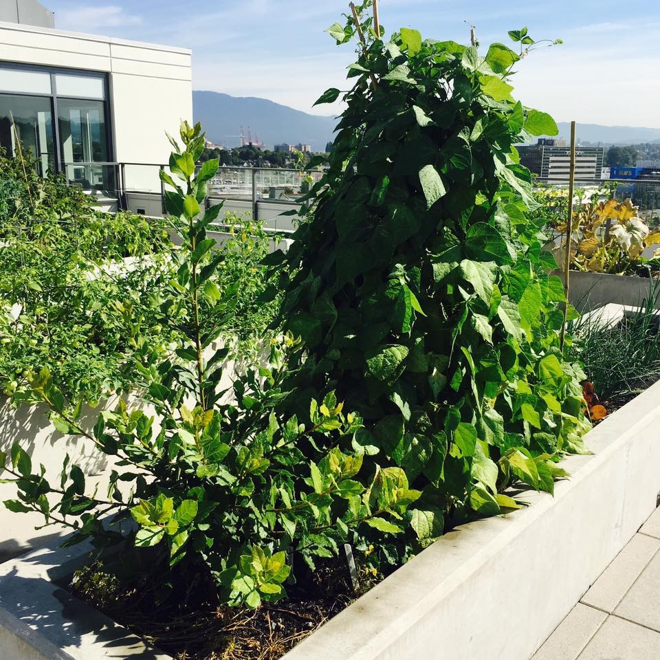 rooftop plants growing