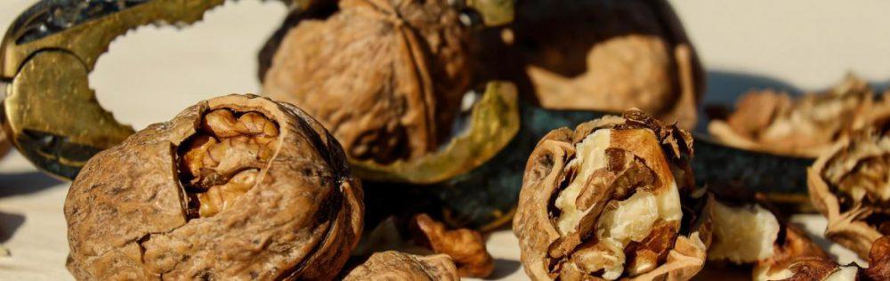 walnut-1751661_1920